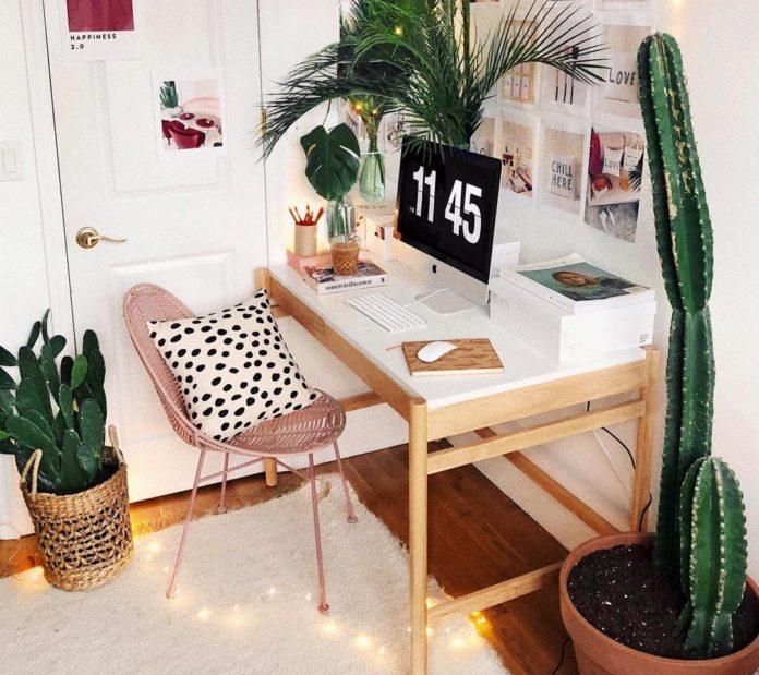plantas para decorar o home office